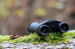 Jumelles dans la forêt